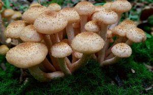 healing power of mushrooms