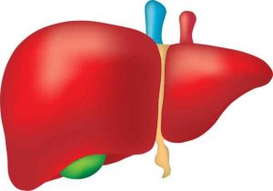 Tips For Maintaining A Healthy Liver